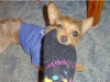thumbs biggs4 Biggs is a chihuahua/yorkie mix from Mingo Junction, Ohio
