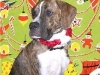 thumbs chuck2 Chuck is a boxer/great dane mix from Orlando, Florida