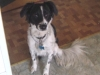 thumbs hero2 Hero the Collie Mix from Washington