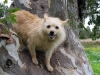 thumbs mitzi4 Mitzi is a terrier mix from Melbourne, Australia