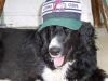 thumbs snoopy5 Snoopy is a collie mix from Martinsburg, Pennsylvania